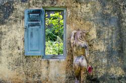 'Window'
