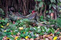 'Tropical Grove'