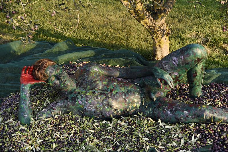 'Olive Harvest'