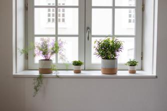 Bureaux aménagés comme à la maison chez DecoWorkers et Splandeed à Senlis, décorés par Coralie Vasseur, agence Carnets Libellule - plantes vertes sur le rebord de la fenêtre