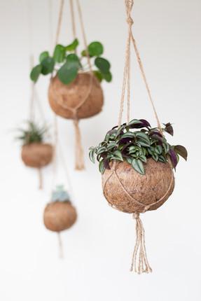 Bureaux aménagés comme à la maison chez DecoWorkers et Splandeed à Senlis, décorés par Coralie Vasseur, agence Carnets Libellule - plantes suspendues en séparation d'espace