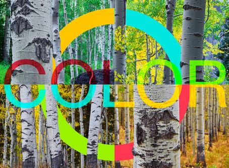 Past Exhibition: Color, A Mixed Media Show: Kane Scheidegger