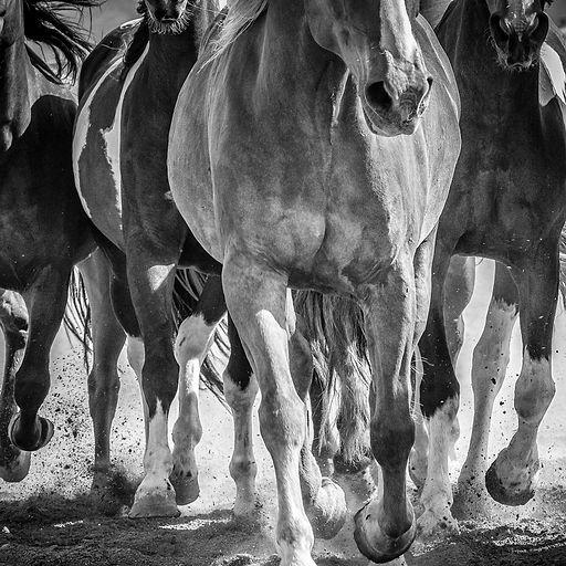 8867-LoneConePhotography-NatalieHeller.j