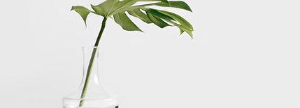 Green Plant_edited.jpg