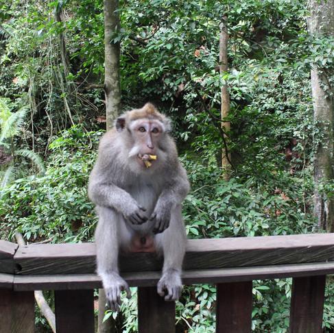 Bali - Ubud rehberi