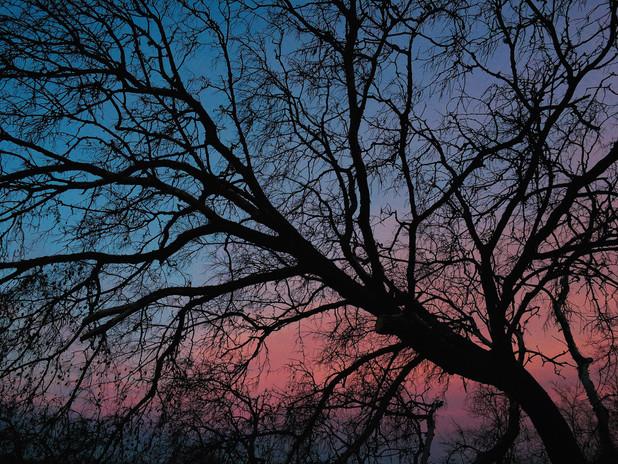 Blush of sunset