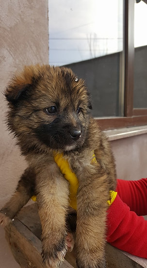 Calypso, born mid Nov.