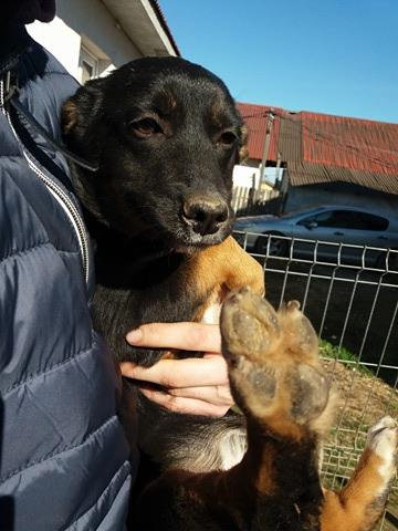 Petal, born Feb. Coming to UK foster