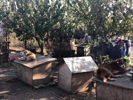 Coca's shelter in Calarasi
