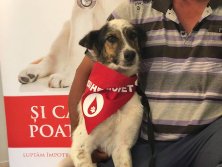 A Blood Bank for Dogs