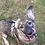 Thumbnail: Max, Hampshire, born late Feb