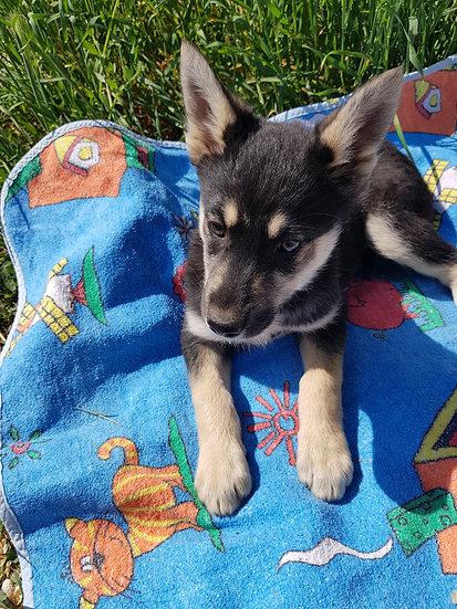 Lilla, born late Feb