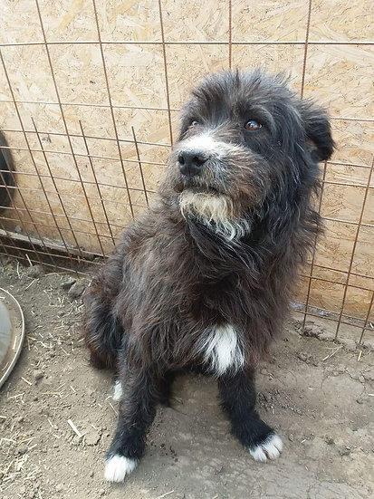 Marcus - 2 years old, gentle dog
