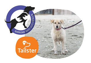 barking-mad-tailster-graphic.jpg