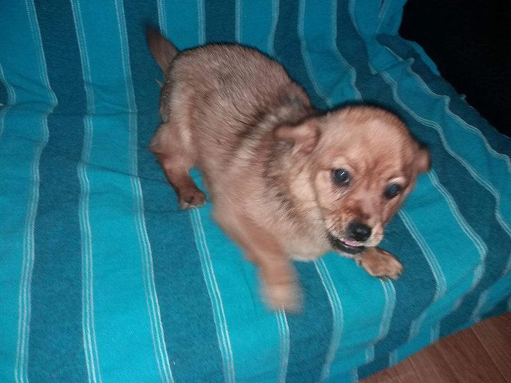 Maya, small girl, one year