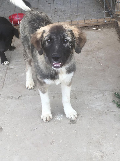 Benji, born March