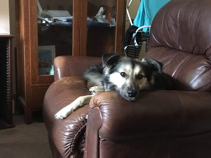 Bella, 2 years, Scotland