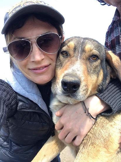 Cara, wonderful older dog.