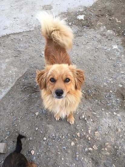 Leo, small, 2 years