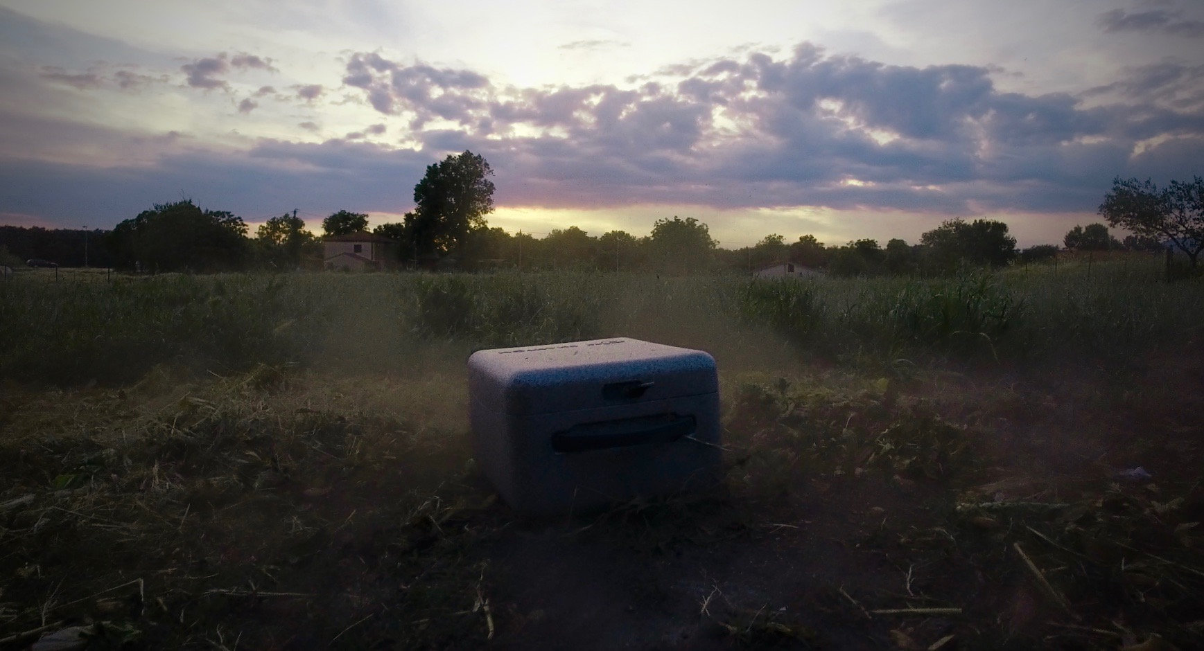 DJI P4 - Sunset.jpg