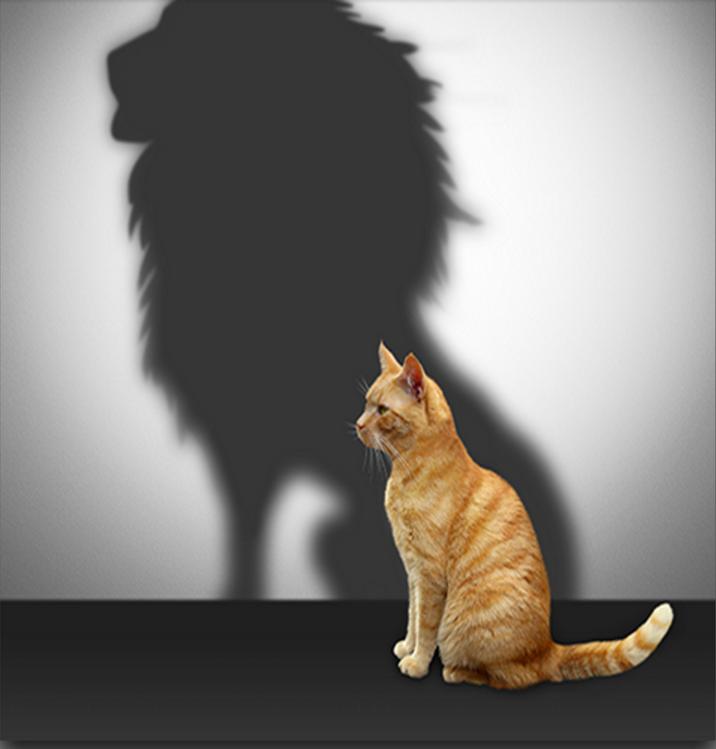 Les 5 secrets de la confiance en soi