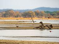 Vogelbeobachtung auf der Safari durch Simbabwe und Sambia.
