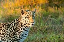 Botswana Safari Lodge, Unterkunft Botswana, Kleine Gruppenreisen südliche Afrika, luxuriöse Lodges Botswana, luxuriöse Unterkünfte Botswana
