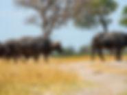 Pures Wildlife auf der Flugsafari Afrika.