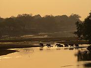 Eine Elefantenherde wandert durch einen Fluss auf der Flugsafari Afrika.