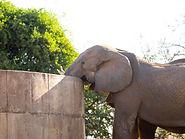 Rhino Safaris KNP