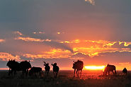 Rhino Safaris - Unforgettable Journeys Through Southern Africa
