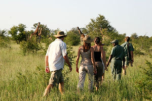 Rhino Safaris Plains Camp Walking