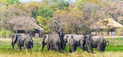 Eine Elefantenherde zieht auf der Safari Reise vorbei.
