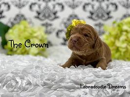 crown 2 wks