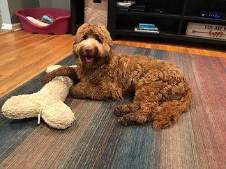 Taffy and her bone.jpg