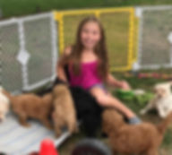 Are You Looking for an Authentic Mini Australian Multigeneration Labradoodle? We have PUPPIES AVAILABLE this holiday season. We are an Australian Labradoodle breeder located in Southeast Michigan. We offer top quality dogs with an emphasis on  temperament, health, and structure. We use specialized testing, socialization, and training techniques to help insure that our Labradoodle Dreams puppy completes your family.