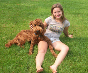 A Guardian Home is very much like a forever home for one of our cream of the crop puppies or young breeding doodle.
