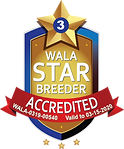 Labradoodle Dreams WALA Star Logo.3.0054