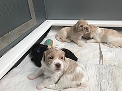 Click here to see what happens as the puppies grow!