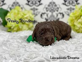 peaky blinders 2 wks