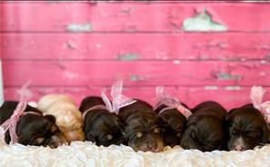 newborn babies