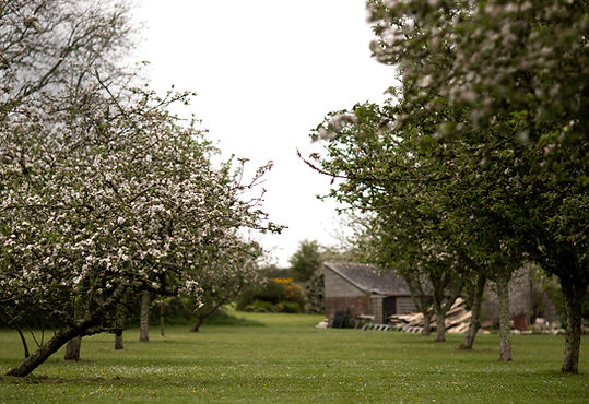 Fowey Valley cider's home orchard at Hybadore, all Cornish heritage varieties