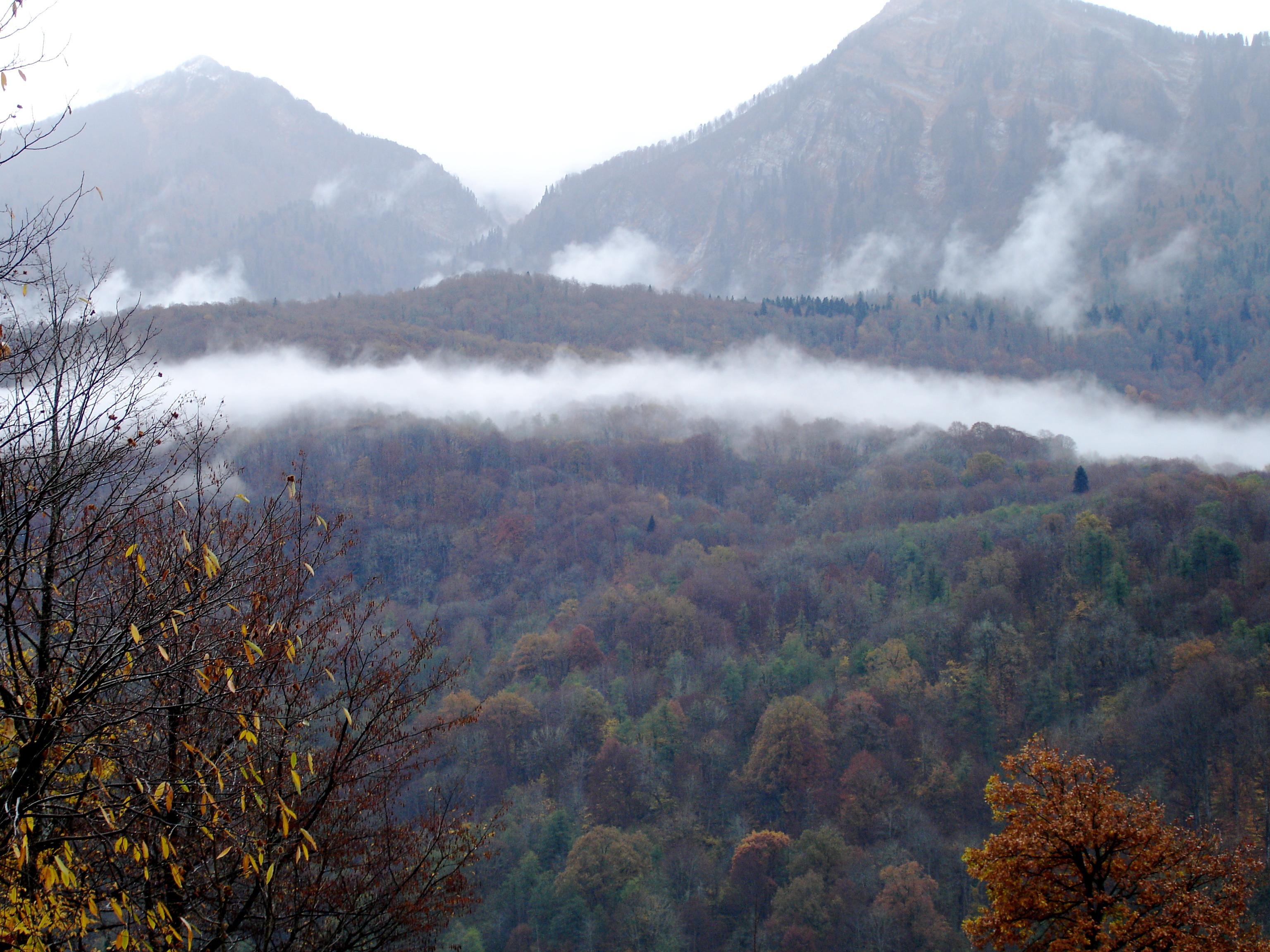Туман ранним утром в ноябре
