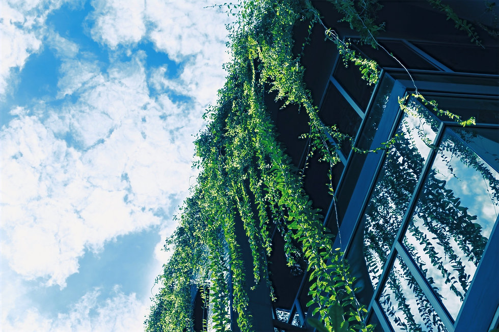 Green%2520Ivy%2520from%2520the%2520Roof_