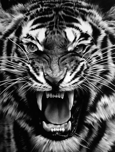 "Robert Longo ""Roaring Tiger"""
