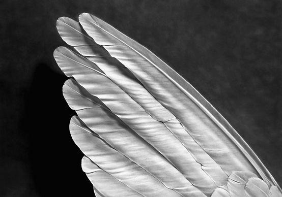 """Robert Longo """"Angel's Wing"""""""