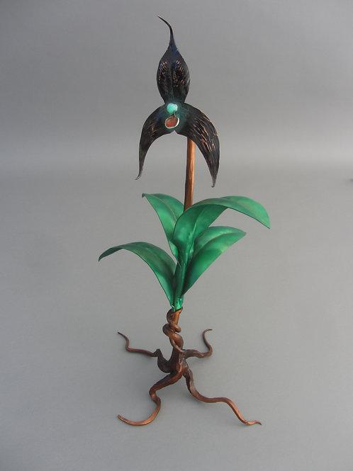 Raven Dracula orchid