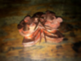 orchid parts