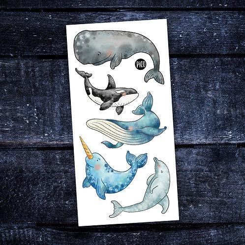 PICO Tatoo Les belles baleines
