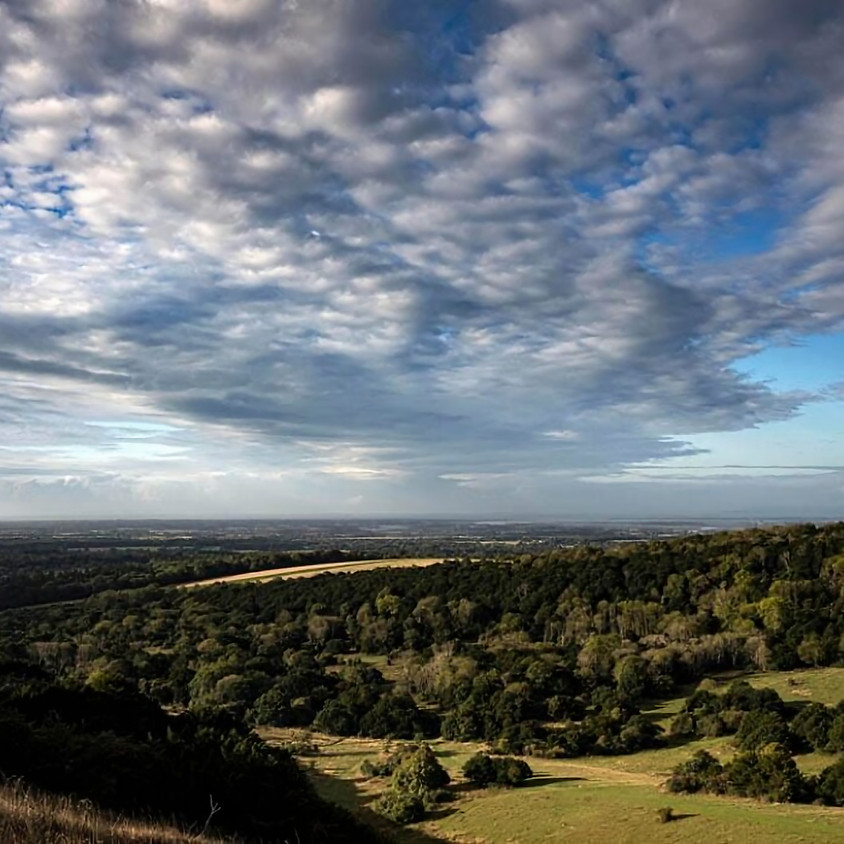 Afternoon sun at Kingley Vale- Walk
